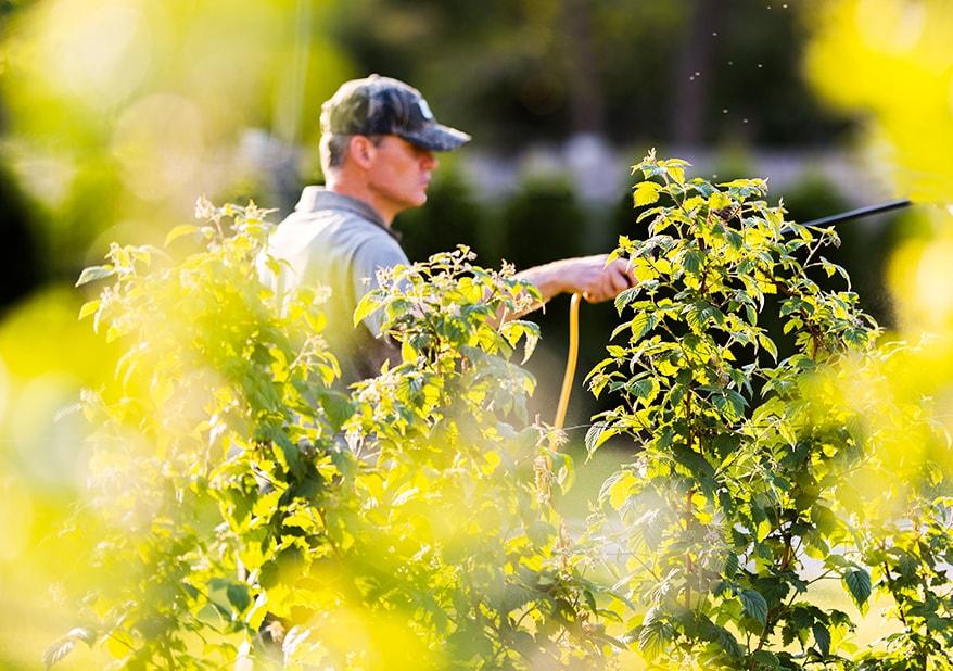 La Compagnie des Jardiniers dispose de la qualification Qualipaysages